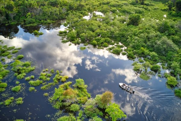 CONGO River Basin rainforest