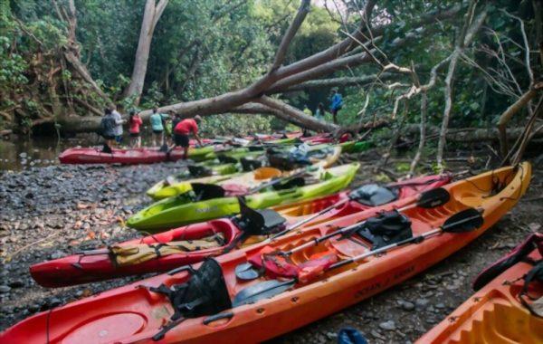 Kayaks on beach in Kauai
